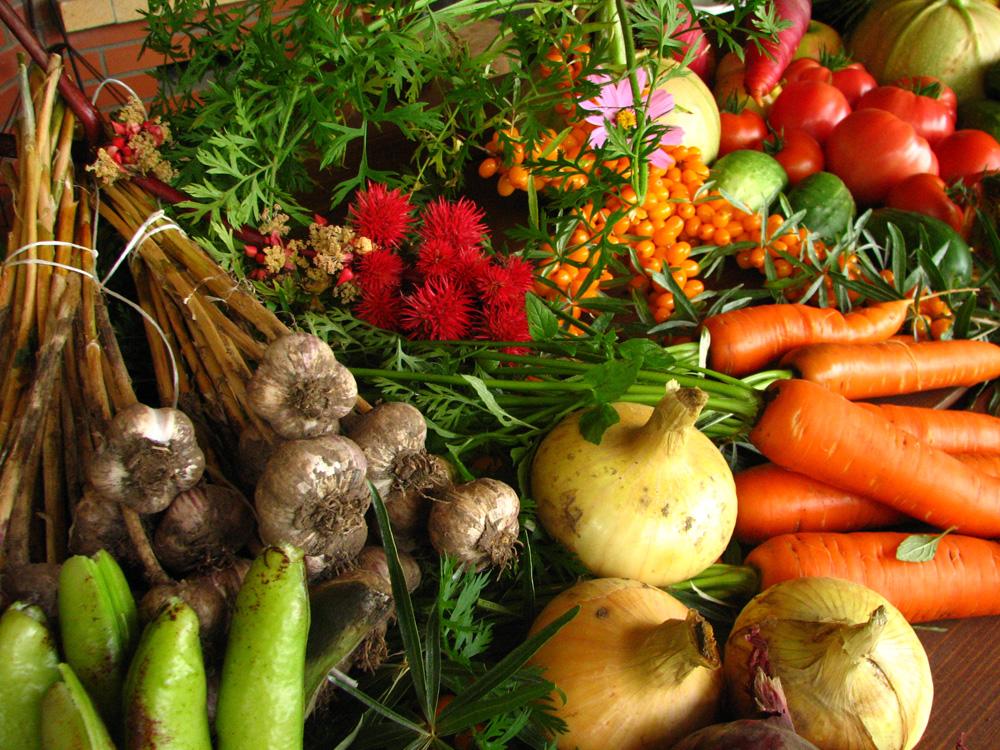 Sunn kost – En kort og viktig oppsummering