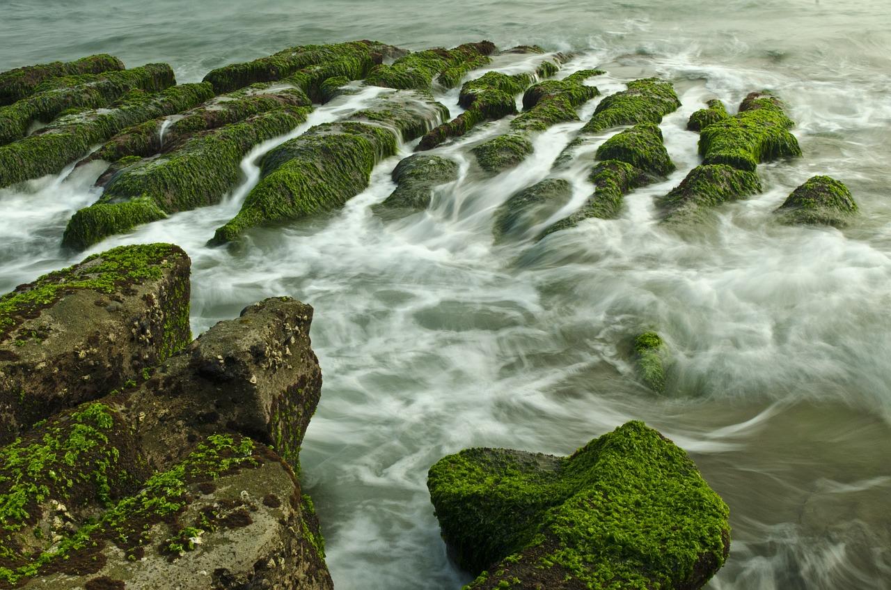 Bli slank med alger i maten